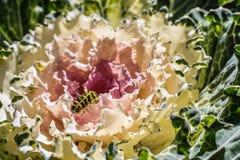 Ciérrese encima de la oruga que se arrastra en verduras frescas Imágenes de archivo libres de regalías