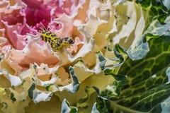 Ciérrese encima de la oruga que se arrastra en verduras frescas Imagen de archivo libre de regalías