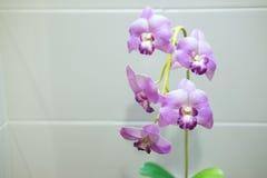 Ciérrese encima de la planta artificial con la flor de la orquídea Fotos de archivo