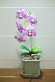 Ciérrese encima de la planta artificial con la flor de la orquídea en la maceta Foto de archivo libre de regalías