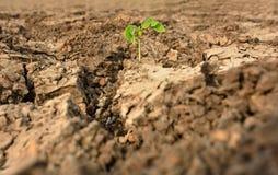 Ciérrese encima de la planta en fango agrietado secado Imagen de archivo