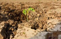 Ciérrese encima de la planta en fango agrietado secado Imagenes de archivo
