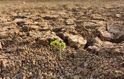 Ciérrese encima de la planta en fango agrietado secado Imágenes de archivo libres de regalías