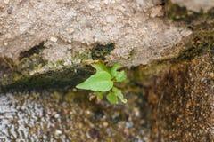 Ciérrese encima de la planta que crece Imagenes de archivo
