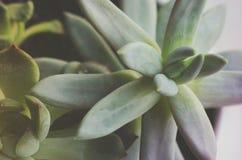 Ciérrese encima de la planta suculenta, flores foto de archivo