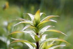 Ciérrese encima de la planta verde con descensos del agua imagenes de archivo