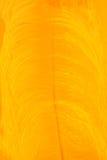 Ciérrese encima de la pluma anaranjada del pájaro para el fondo Foto de archivo