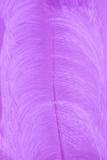 Ciérrese encima de la pluma púrpura del pájaro para el fondo Fotos de archivo libres de regalías