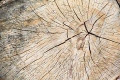Ciérrese encima de la textura de madera del árbol cortado Fotos de archivo