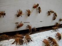 Ciérrese encima de la vista de la entrada a una colmena de la abeja Imágenes de archivo libres de regalías
