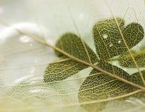 Ciérrese encima de la vista de la textura de la hoja Foto de archivo libre de regalías