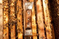 Ciérrese encima de la vista de las abejas y del cuchillo de trabajo del apicultor Imágenes de archivo libres de regalías