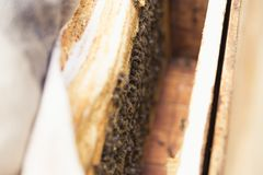 Ciérrese encima de la vista del cuerpo abierto de la colmena que muestra los marcos poblados por las abejas de la miel Imágenes de archivo libres de regalías