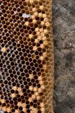 Ciérrese encima de la vista del panal con la miel en fondo del vintage Imágenes de archivo libres de regalías