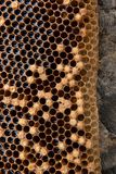 Ciérrese encima de la vista del panal con la miel en fondo del vintage Fotografía de archivo