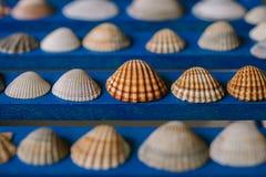 Ciérrese encima de la vista de muchas diversas conchas marinas en fondo de madera azul Colección del Seashell imagenes de archivo
