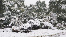 Ciérrese encima de la vista de la nieve que baja en las ramas de árboles La nieve cae de rama de árbol en un parque almacen de video