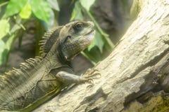 Ciérrese encima de lagarto Fotografía de archivo libre de regalías