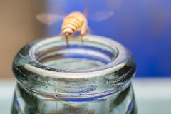 Ciérrese encima de las botellas de cristal con la mosca de abeja en el rasguño de la miel de la consumición Imagen de archivo libre de regalías