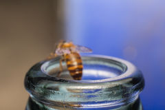 Ciérrese encima de las botellas de cristal con la mosca de abeja en el rasguño de la miel de la consumición Fotos de archivo libres de regalías