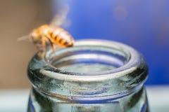 Ciérrese encima de las botellas de cristal con la mosca de abeja en el rasguño de la miel de la consumición Imagen de archivo