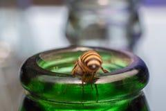 Ciérrese encima de las botellas de cristal con la mosca de abeja en el rasguño de la miel de la consumición Foto de archivo libre de regalías
