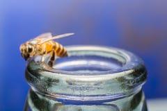 Ciérrese encima de las botellas de cristal con la mosca de abeja en el rasguño de la miel de la consumición Fotografía de archivo