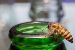 Ciérrese encima de las botellas de cristal con la mosca de abeja en el rasguño de la miel de la consumición Foto de archivo