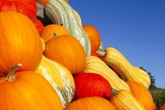 Ciérrese encima de las diversas calabazas ornamentales coloridas Fotografía de archivo