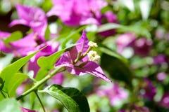 Ciérrese encima de las flores Foto de archivo