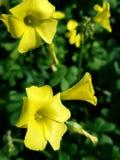 Ciérrese encima de las flores amarillas en el remiendo verde 4k Fotografía de archivo