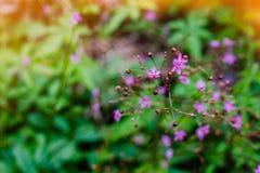 Ciérrese encima de las flores púrpuras en fondo verde en foco selectivo Imágenes de archivo libres de regalías