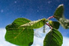 Ciérrese encima de las hojas con descensos macros imagen de archivo