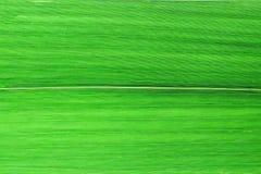 Ciérrese encima de las hojas de bambú verdes Fotos de archivo