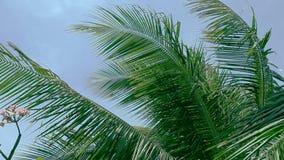Ciérrese encima de las hojas de la palmera que soplan en el viento HD almacen de metraje de vídeo