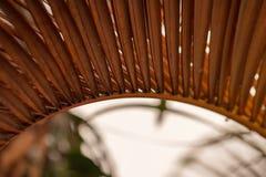 Ciérrese encima de las hojas de palmeras secadas foto de archivo libre de regalías
