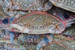 Ciérrese encima de las mierdas azules frescas en el hielo, marisco en el mercado de Tailandia foto de archivo libre de regalías