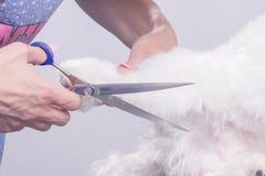 Ciérrese encima de las tijeras del corte del pelo de la piel del perro Fotografía de archivo