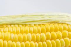 Ciérrese encima de maíz Foto de archivo libre de regalías