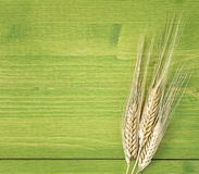 Ciérrese encima de maíz del oído foto de archivo libre de regalías
