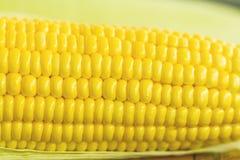 Ciérrese encima de maíz fresco amarillo Foto de archivo