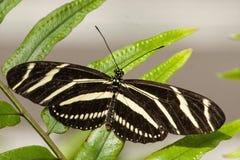 Ciérrese encima de mariposa Foto de archivo libre de regalías