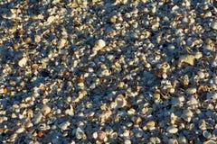 Ciérrese encima de millares de pequeñas cáscaras en la playa Imagenes de archivo