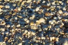 Ciérrese encima de millares de pequeñas cáscaras en la playa Foto de archivo libre de regalías