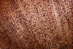 Ciérrese encima de modelos y de texturas de la fronda de la palma Imagen de archivo libre de regalías