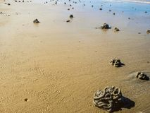 Ciérrese encima de moldes de la lombriz para cebo en la playa imagenes de archivo