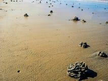 Ciérrese encima de moldes de la lombriz para cebo en la playa foto de archivo libre de regalías
