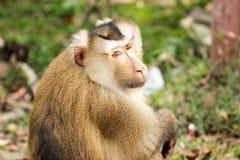 Ciérrese encima de mono en bosque Fotografía de archivo libre de regalías