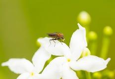 Ciérrese encima de mosca con agua que cae de la boca foto de archivo libre de regalías