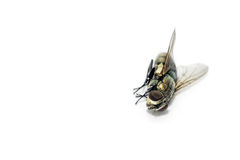 Ciérrese encima de moscas muertas Fotos de archivo libres de regalías